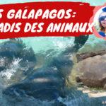 animaux aux îles Galapagos en Équateur