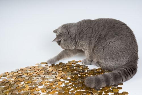 Chat comptant des pièces de monnaie