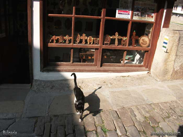 Un chat devant un magasin de croix et d'objets religieux en Bulgarie