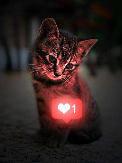 Chat avec un coeur like symbolisant les réseaux sociaux